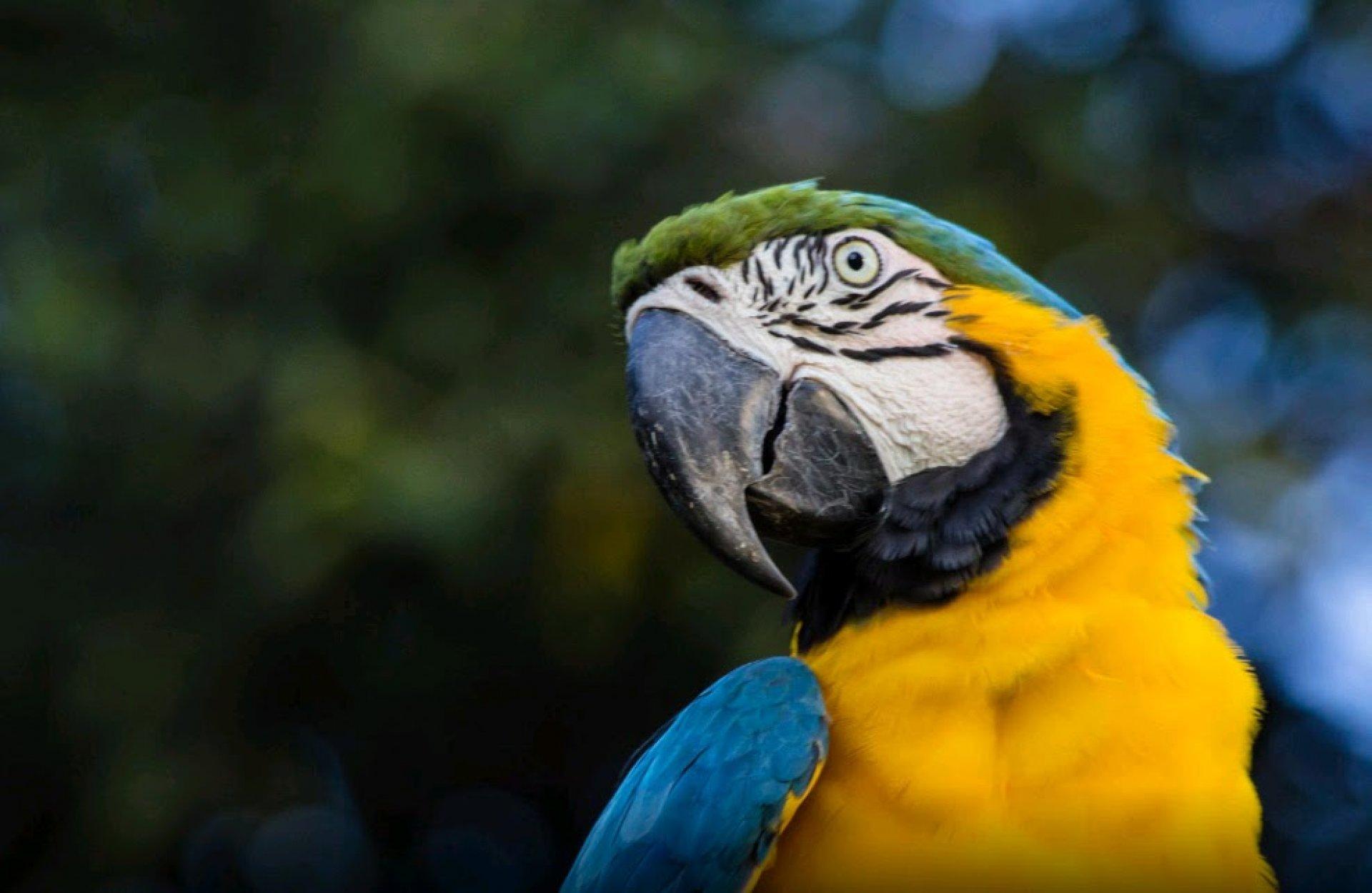 Cuyabeno Amazon Jungle Tour 5 Days 4 Nights